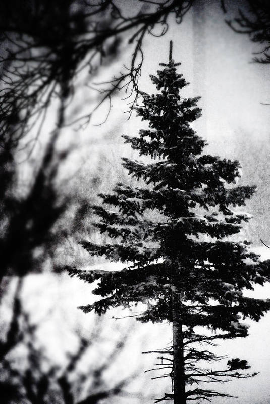 Tree Art Print featuring the photograph X-mas Tree by Simone Hester