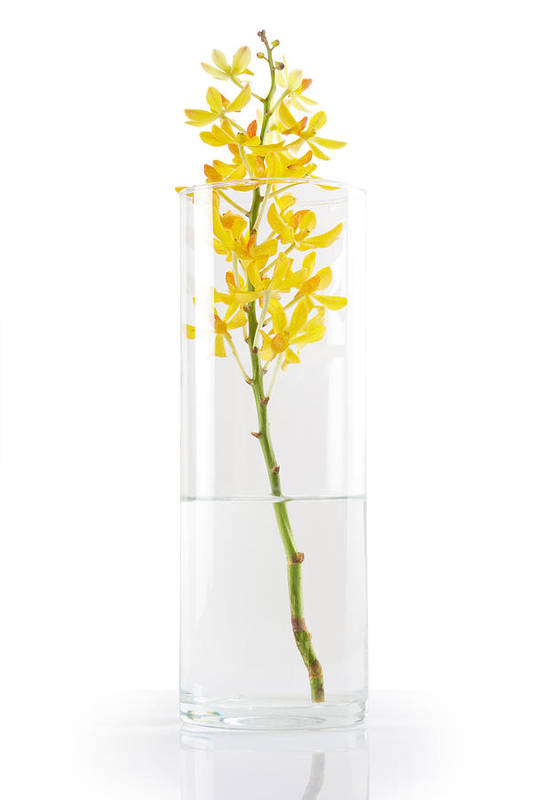 Asian Art Print featuring the photograph Yellow Orchid In Vase by Atiketta Sangasaeng
