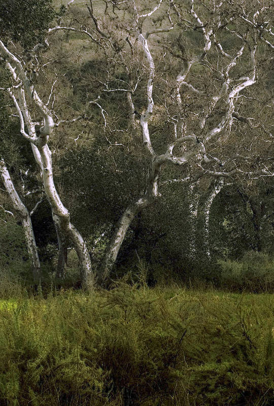 Tree Art Print featuring the photograph Dv Creek Trees by Karen W Meyer
