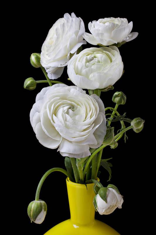 White Ranunculus Flower Yellow Art Print featuring the photograph  White Ranunculus In Yellow Vase by Garry Gay