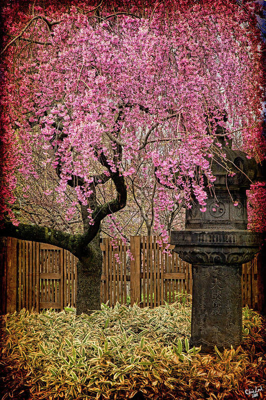 Asian Art Print featuring the photograph Asian Spring by Chris Lord