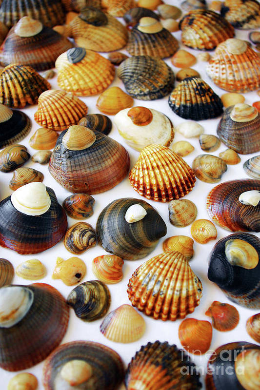 Aquatic Art Print featuring the photograph Shell Background by Carlos Caetano