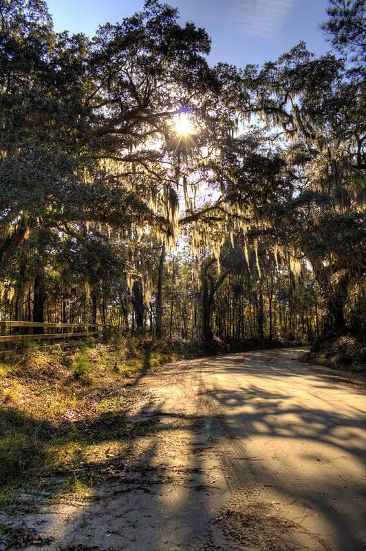 Live Oak Art Print featuring the photograph Southern Oak Shadows by Dustin K Ryan