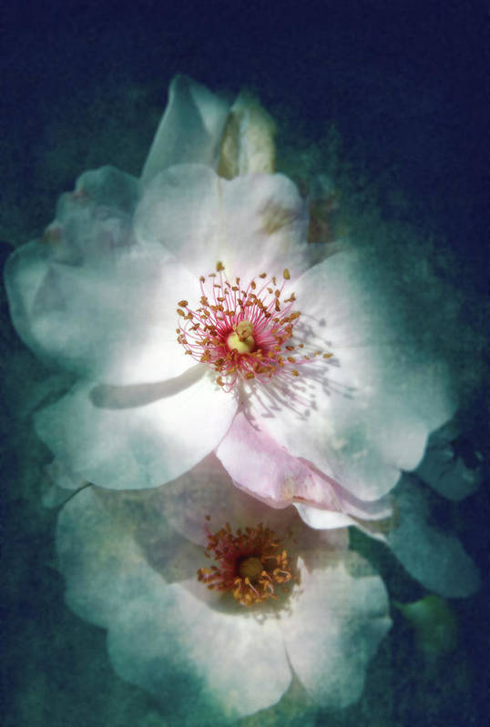 Flower Art Print featuring the photograph Spring Flowering by Lali Kacharava