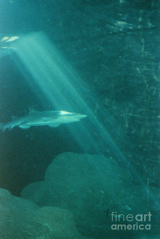 Sharks Art Print featuring the photograph Close Encounters by Jeffery L Bowers
