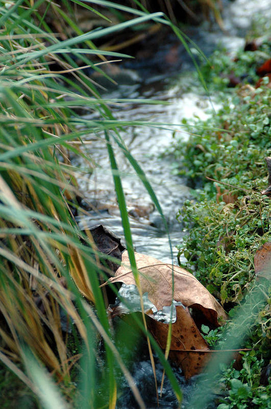 Stream Art Print featuring the photograph Untitled by Kathy Schumann