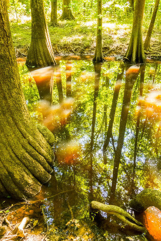 Broken Art Print featuring the photograph cypress forest and swamp of Congaree National Park in South Caro by Alex Grichenko