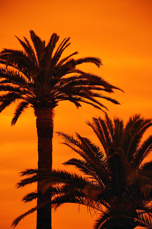 Palm Art Print featuring the photograph Sunrise And Sunset by LS Photography