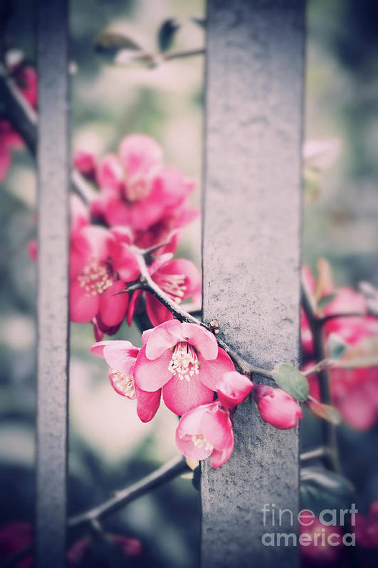 Spring Art Print featuring the photograph A Delicate Spring by Silvia Ganora