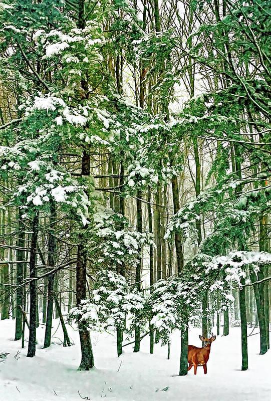 Deer Art Print featuring the photograph A Snowy Day by Steve Harrington