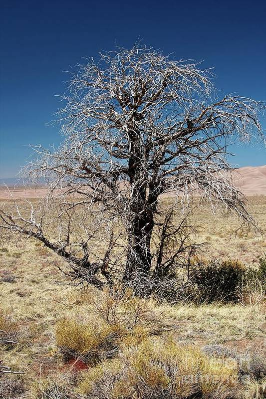 Alamosa Art Print featuring the photograph A Tree In The Dry Land Color by Hideaki Sakurai
