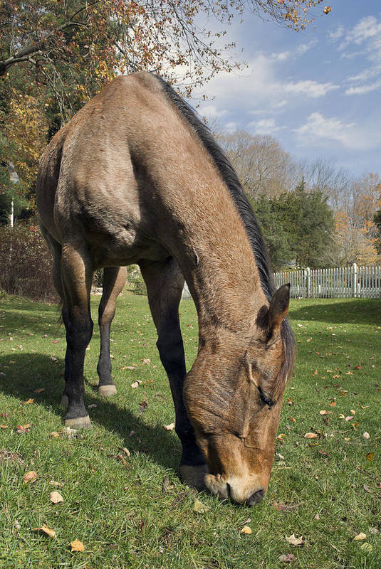 Horse Art Print featuring the photograph All Neck by Jack Goldberg