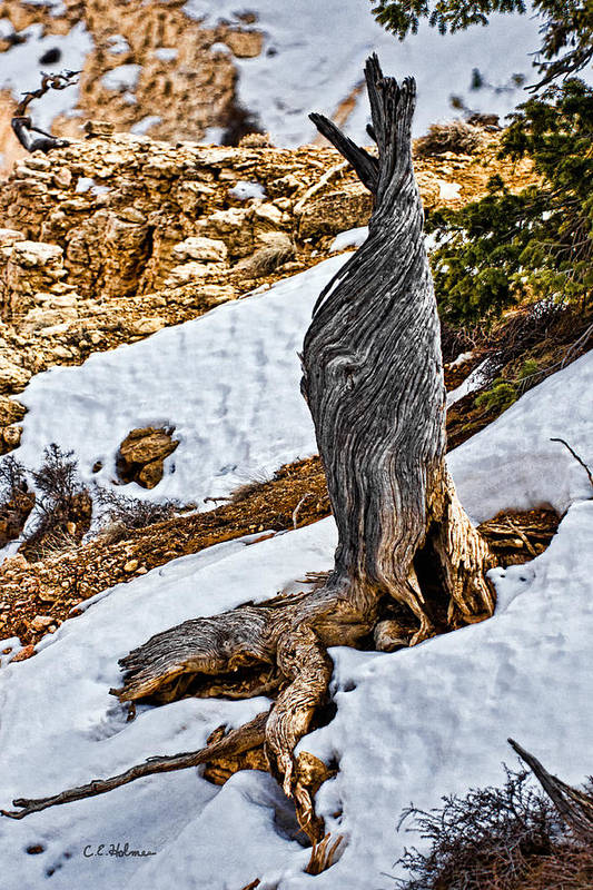 Tree Art Print featuring the photograph All That Remains by Christopher Holmes
