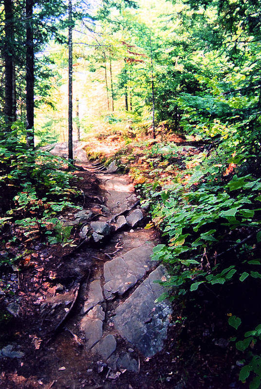 Nature Art Print featuring the photograph Along The Path Ae 2 by Lyle Crump