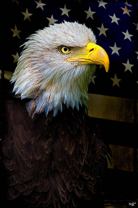 Eagle Art Print featuring the photograph An American Icon by Chris Lord