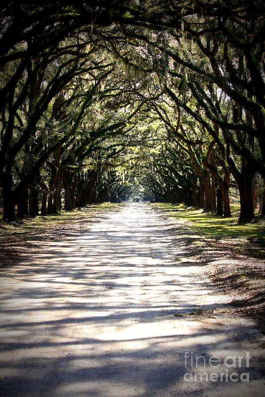 Live Oaks Art Print featuring the photograph Anticipation by Carol Groenen