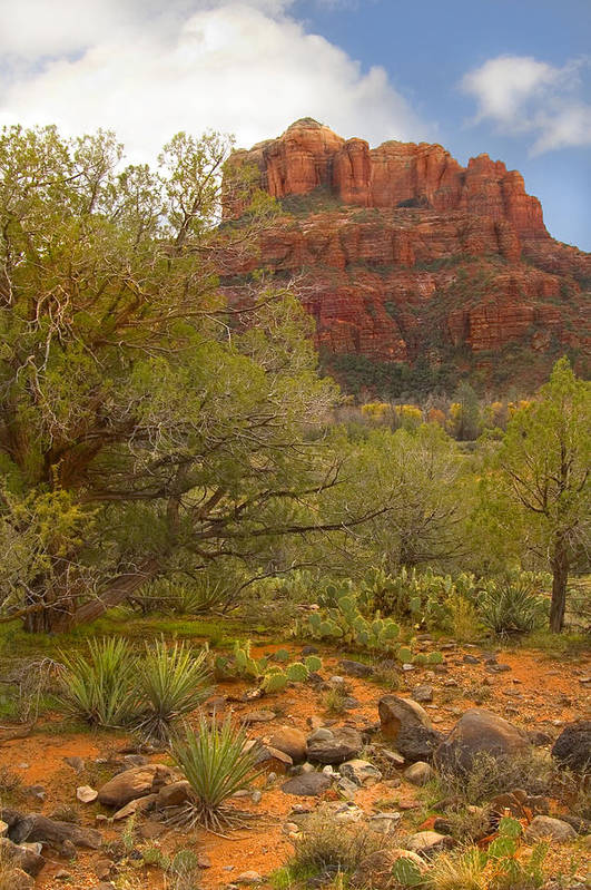 Sedona Art Print featuring the photograph Arizona Outback 3 by Mike McGlothlen
