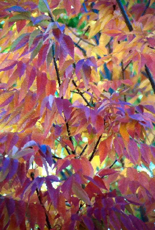 Ash Tree Art Print featuring the photograph Autumn Ash Tree 1 by Steve Ohlsen