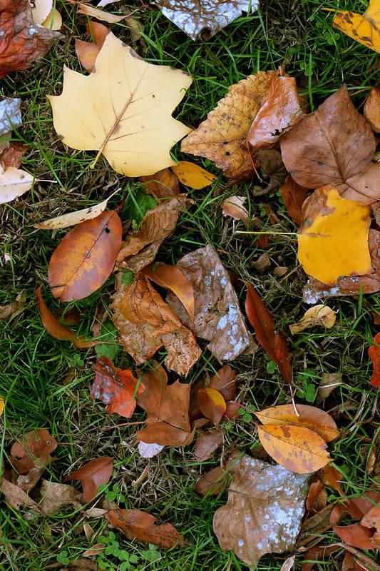 11.06.15_a Art Print featuring the photograph Autumn Carpet 001 by Dorin Adrian Berbier