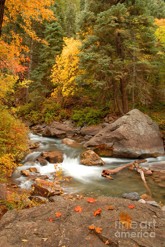 Autumn Art Print featuring the photograph Autumn In Alpine Loop by Dennis Hammer