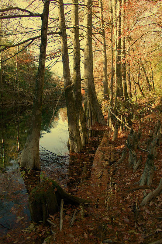 River Art Print featuring the photograph Autumn Leaves And Cypresses by Nina Fosdick