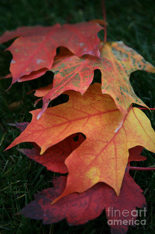 Autumn Art Print featuring the photograph Autumn Leaves by Timothy Johnson