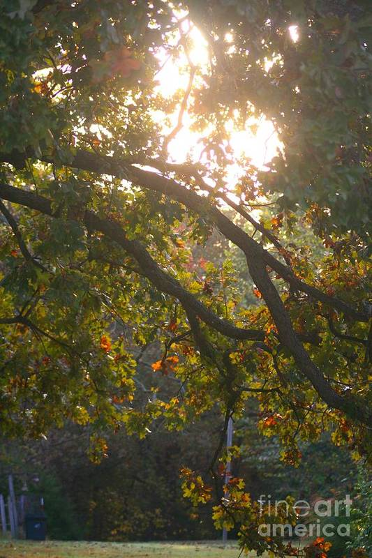 Autumn Art Print featuring the photograph Autumn Morning Glow by Nadine Rippelmeyer