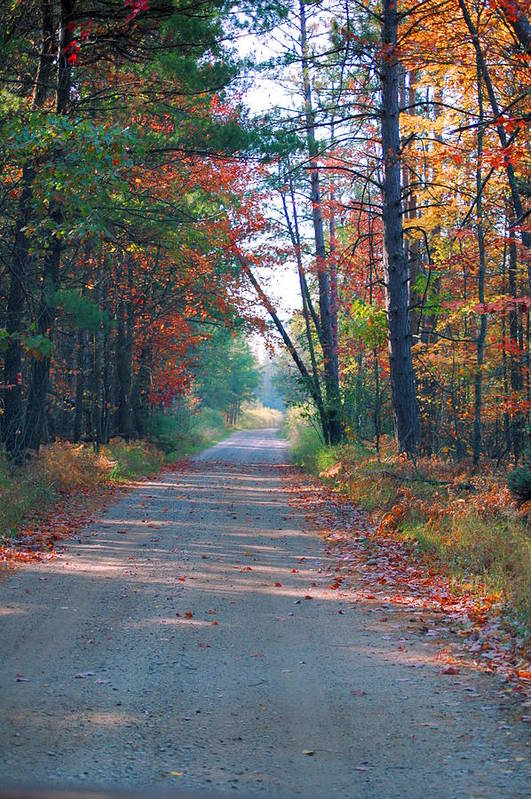 Autumn Art Print featuring the photograph Autumn Road by Jennifer Englehardt