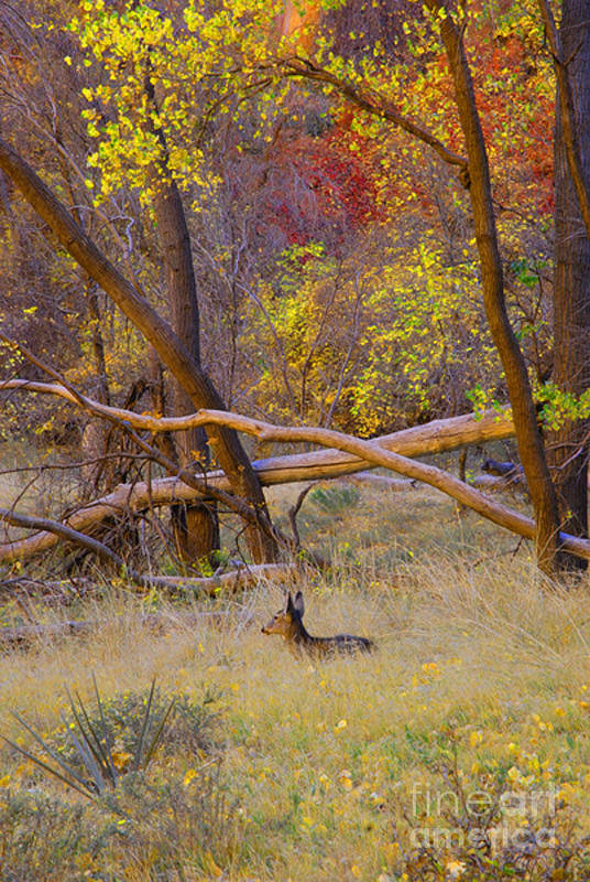 Deer Art Print featuring the photograph Autumn Yearling by Dennis Hammer