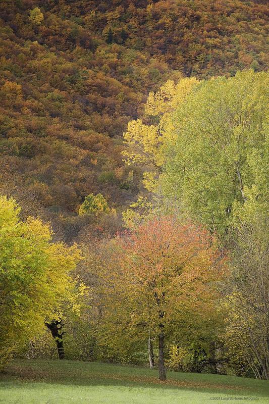 Autumn Art Print featuring the photograph Autumn1 by Luigi Barbano BARBANO LLC