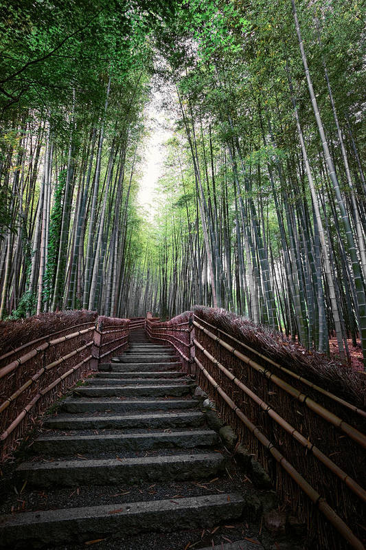 Bamboo Art Print featuring the photograph Bamboo Forest Of Japan by Daniel Hagerman