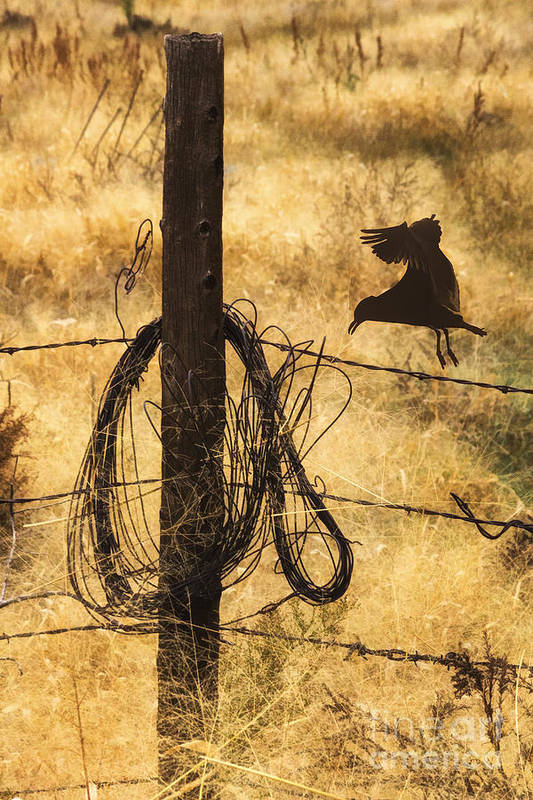 Barbed Landing Art Print featuring the photograph Barbed Landing by Priscilla Burgers