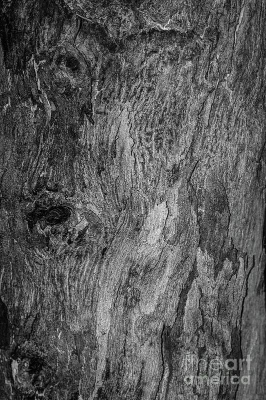 Bark Art Print featuring the photograph Bark At The Moon by Evil Shadows