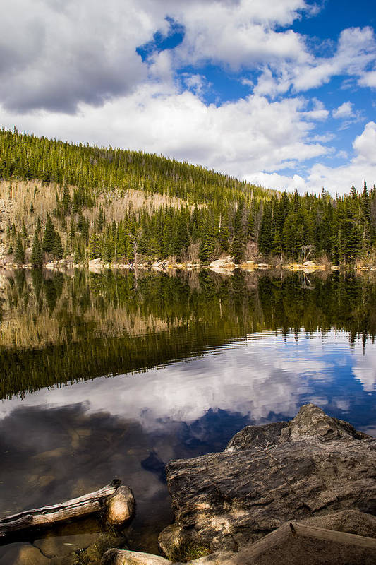 Colorado Art Print featuring the photograph Bear Reflection by Krista Giese