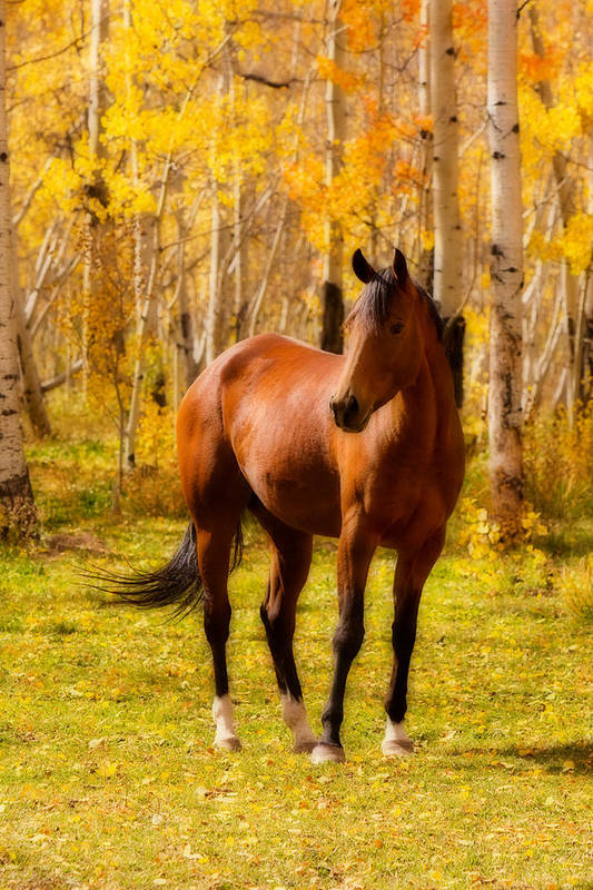 Horse Art Print featuring the photograph Beautiful Autumn Horse by James BO Insogna