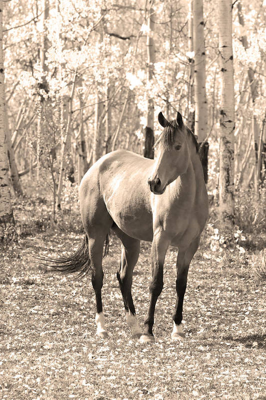 Horse Art Print featuring the photograph Beautiful Horse In Sepia by James BO Insogna