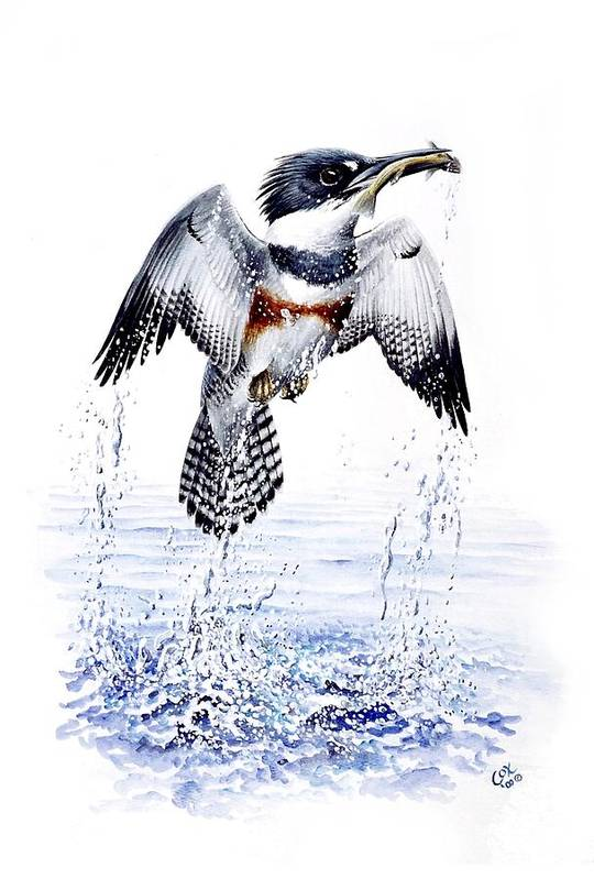 Chris Cox Art Print featuring the painting Belted Kingfisher by Christopher Cox