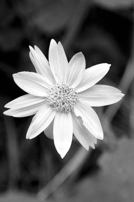 Nature Art Print featuring the photograph Black And White by Emily Horn