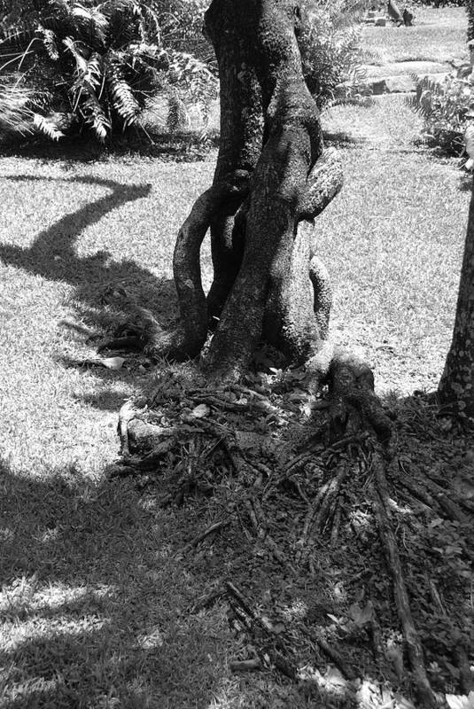Black And White Art Print featuring the photograph Black And White Roots by Rob Hans