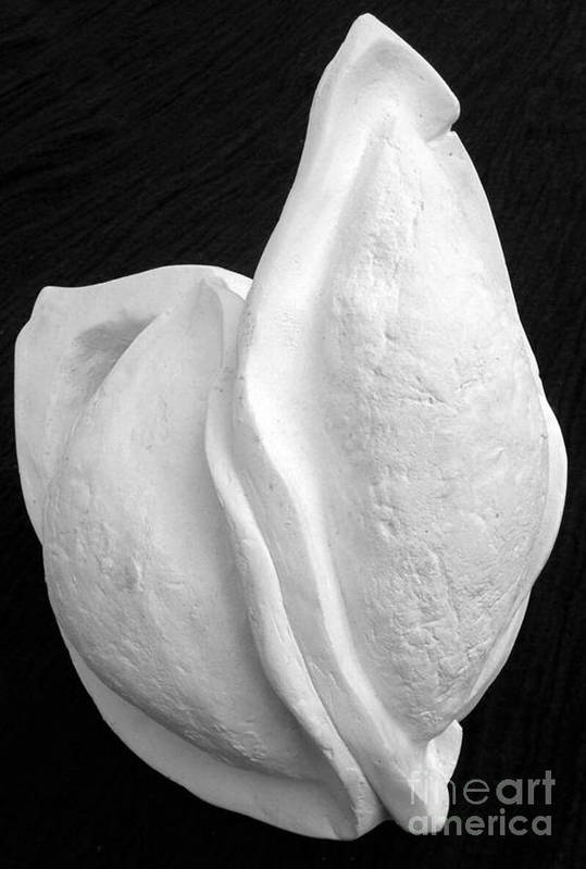 Plaster Art Print featuring the sculpture Bleached Husk by Xoey HAWK