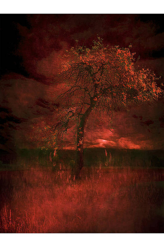 Art Print featuring the photograph Bloody Tree by Zygmunt Kozimor