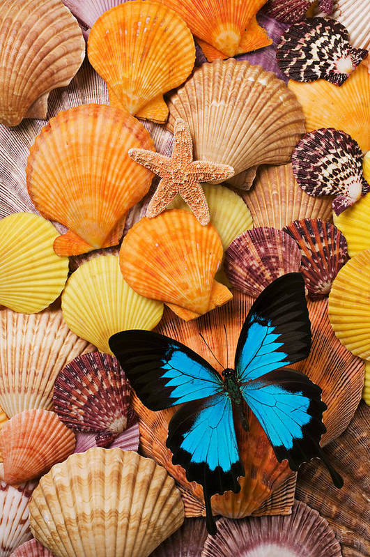 Butterfly Print featuring the photograph Blue Butterfly And Sea Shells by Garry Gay