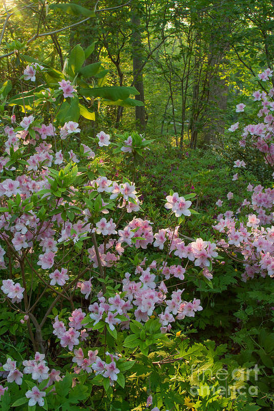 Spring Landscapes Art Print featuring the photograph Brookside Gardens 5 by Chris Scroggins