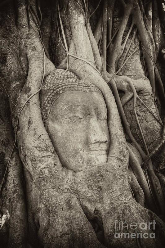Buddha Art Print featuring the photograph Buddha Head In Tree by Fototrav Print
