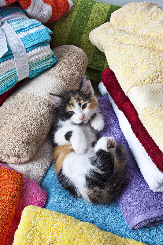 Calico Kitten Soft Towels Cat Art Print featuring the photograph Calico Kitten On Towels by Garry Gay