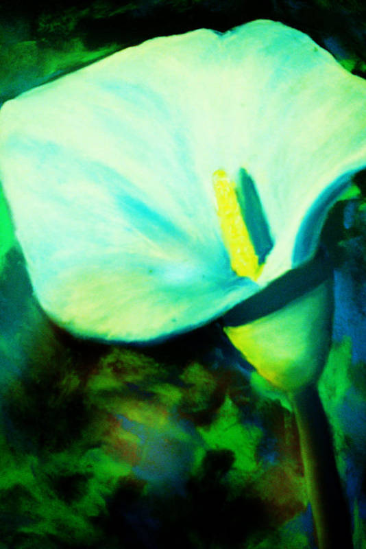 White Calla Lily Art Print featuring the painting Calla Lily by Melinda Etzold