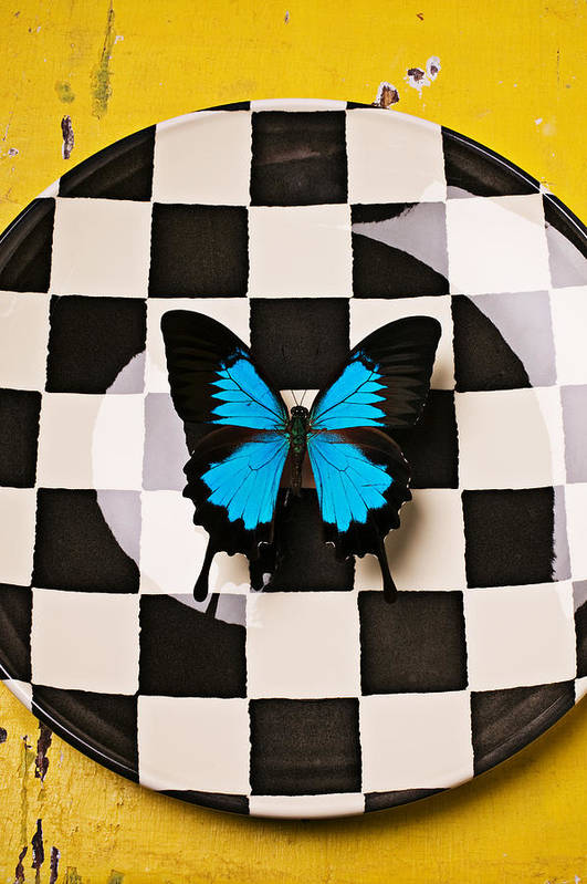 Blue Art Print featuring the photograph Checker Plate And Blue Butterfly by Garry Gay