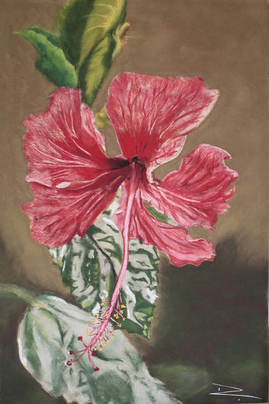 Flower Art Print featuring the painting China Rose by D Turner
