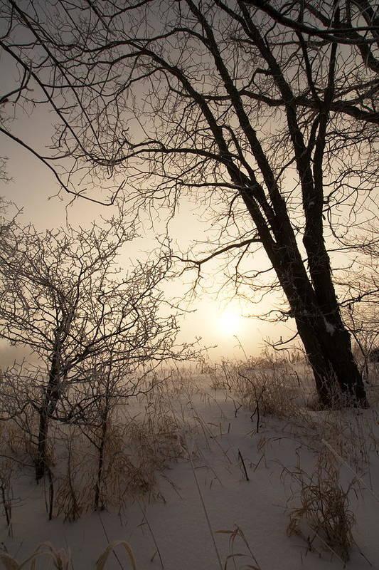 Landscape Art Print featuring the photograph Cold Morning by Amanda Kiplinger