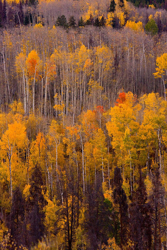 Vertical Art Print featuring the photograph Colorful Colorado Autumn Landscape Vertical Image by James BO Insogna